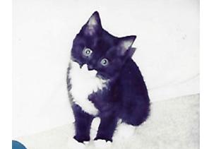 coco-kitten
